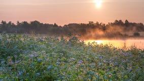 由沼泽的野花 库存图片
