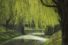 由泉水的杨柳 图库摄影