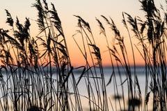 由海岸的下午 免版税图库摄影