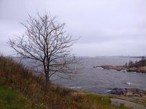 由海岸的年轻树 免版税库存图片