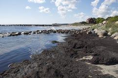 由海岸的瑞典 免版税库存图片