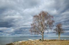 由海岸线的树 免版税库存照片