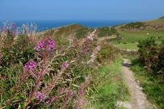 由海岸道路的紫色花 免版税库存照片