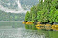 由海洋海岸的春天森林 库存图片