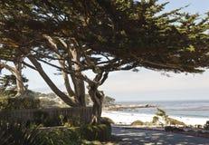 由海海滩的Carmel在加利福尼亚 免版税库存照片