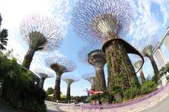 由海湾的庭院在新加坡 免版税图库摄影