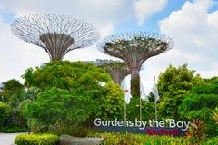 由海湾的庭院 新加坡 免版税图库摄影