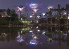 由海湾的庭院-超级结构树 库存图片