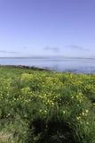 由海湾的美好的天 库存照片