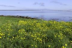 由海湾的美好的天 图库摄影