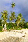 由海滩的可可椰子树 免版税库存照片