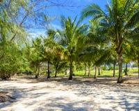 由海滩的棕榈树丛 免版税图库摄影