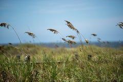 由海滩的海草在明亮的夏天天空下 图库摄影