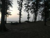 由海滩边的自然 免版税库存图片