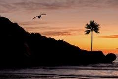 由海的一棵棕榈树日出的 免版税库存图片