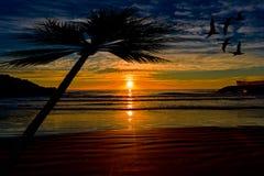 由海的一棵棕榈树日出的 图库摄影