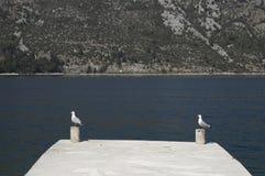 由海的两只海鸥 库存图片