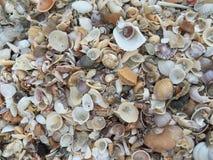 由海的壳 免版税库存图片