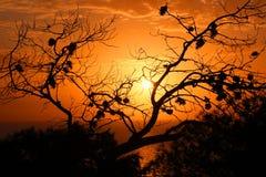 由海的日落通过树 免版税库存图片