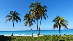 由海的棕榈树在古巴 免版税图库摄影