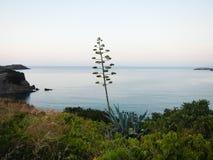 由海的植物 免版税库存照片