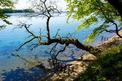 由海的残破的树 免版税库存照片