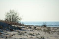 由海的灌木 库存照片