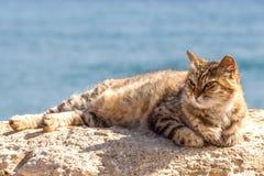 由海的猫 免版税库存图片