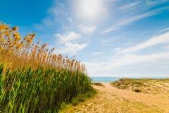 由海的芦苇Solanas海滩的 库存图片