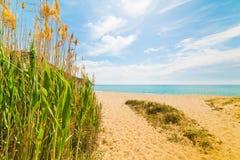 由海的芦苇Solanas海滩的 免版税库存照片