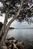 由海边的美丽的树 免版税库存照片