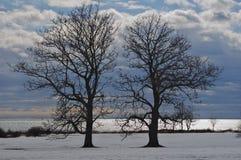由海洋的冬天树 库存照片