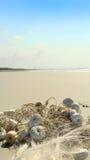 由海滩的捕鱼网 免版税库存图片
