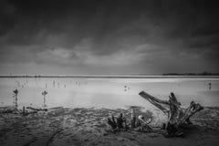 由海滩的树桩 库存图片