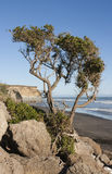 由海滩的树 免版税库存照片