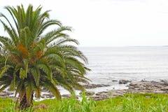 由海洋的棕榈树 免版税图库摄影