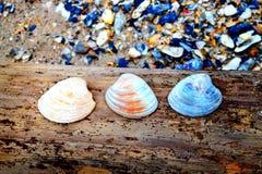由海洋的贝壳 免版税库存照片