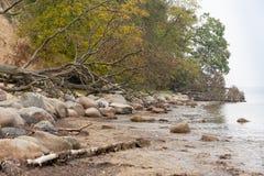 由海滩边缘的树在秋天 库存照片