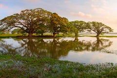 由湖和沼泽的树 免版税图库摄影
