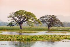 由湖和沼泽的树 免版税库存图片