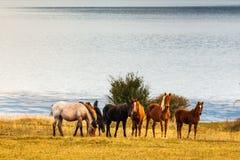 由湖的七匹马 免版税图库摄影