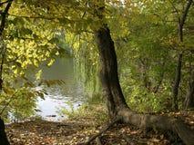 由湖的叶茂盛结构树 免版税库存图片