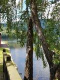 由湖的夏天 免版税库存照片