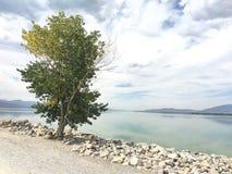 由湖的孤立树 免版税库存图片