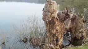 由湖的木头 免版税库存图片