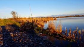 由湖的未受干扰的鸟早晨 与湖边鸟野生生物的平静的场面 股票录像