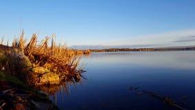 由湖的未受干扰的鸟早晨 与湖边鸟野生生物的平静的场面 股票视频