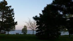 由湖的树 免版税库存照片