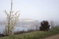 由湖的树 免版税库存图片