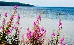由湖的桃红色花在夏天 免版税图库摄影